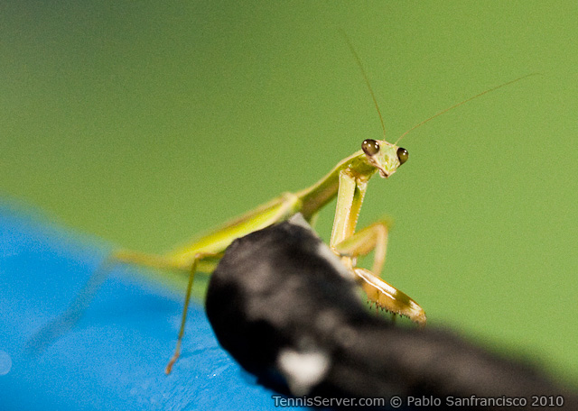 Praying Mantis Legg Mason Tennis